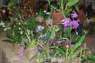 toute petite partie du stand de La cour des Orchidées