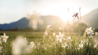 Blumenwiese Gesäuse