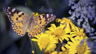 Fauna und Flora im Gesäuse