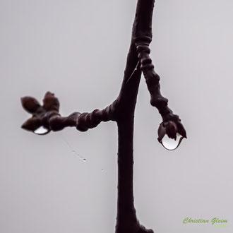 Wasserkinospe
