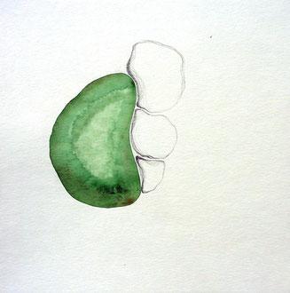 Ocelles  L'espace entre les pierres