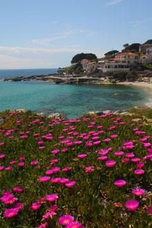 Ile d'Elbe en famille et fourgon aménagé : la douceur de vivre Toscane (Italie) 28