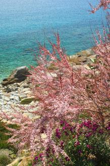 Ile d'Elbe en famille et fourgon aménagé : la douceur de vivre Toscane (Italie) 27