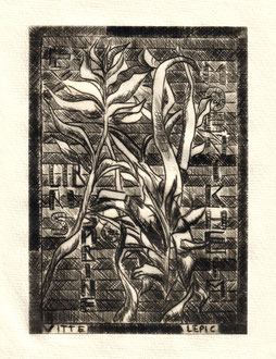 SABINE Kaltnadelradierung -  14,6 x 10,4 cm