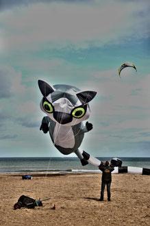 Cerf volant - photo proposée par Bruno K.