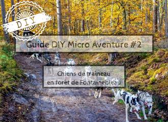 Guide-Micro aventure-IDF-chien de traineau-Forêt fontainebleau