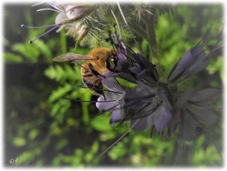 Beobachtung einer Biene...
