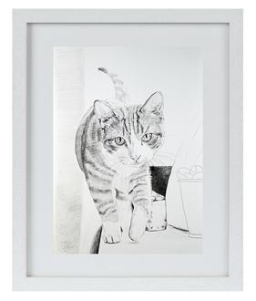 """Prima DIVA Zeichnung von """"Mim"""" einer europäischen Hauskatze"""