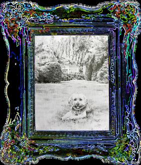 """Gold DIVA Zeichnung von """"Toni"""" einem Tibet-Terrier"""