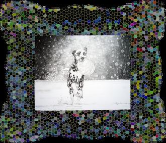 """Platin DIVA Zeichnung von """"Atorka"""" einem Dalmatiner"""