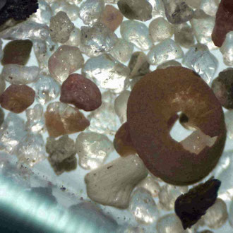 Erbsenmuschel/ Pisidium, 110