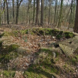 ?? eingefallener, ehemaliger großer Ameisenhügel in den Quaaler Tannen /Christianenthal (Hof-Innenkante d=1,5m und h=1m) ??