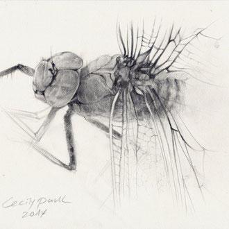 Insekten zeichnen, Insekten illustieren, Zeichnen der Insekten, Illustration der Insekten