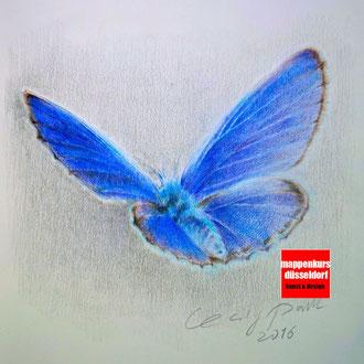 Pastellkurs, Malen mit Pastellfarben, Pastellmalerei, Schmettling mit Pastell malen lernen, Mappenkurs Düsseldorf