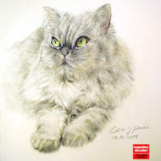 Tierportraitzeichnen, Tier zeichnen, Tiere zeichnen lernen, Tierzeichnen für Fortgeschrittene, Mappenkurs Düsseldorf