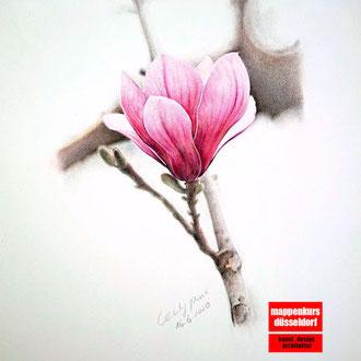Blumenzeichnen, Blumen zeichnen, Blumen zeichnen lernen, Blumenzeichnen für Fortgeschrittene, Mappenkurs Düsseldorf
