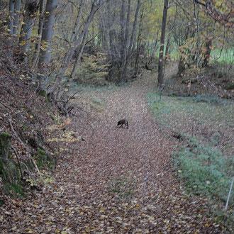 welcher Weg geht jetzt eigentlich zum Hirschen...