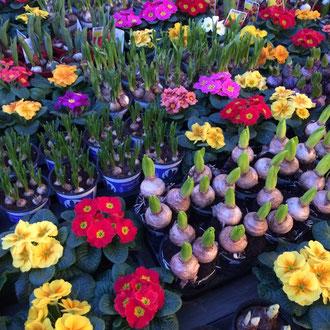 Beet Und Balkonpflanzen Schnitzlers Blumen Dusseldorf Hamm