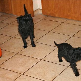 Kurz nach ihrer Ankunft erkundet Amelia (rechts im Bild) das neue Zuhause zusammen mit ihrem Freund Taonga. (Foto: Klaus Leutermann)
