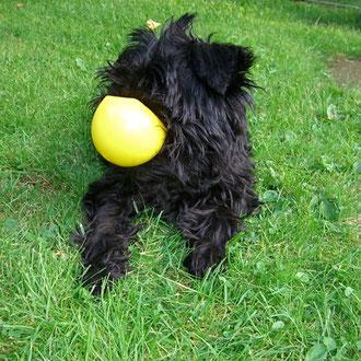 Unser kleiner Spaßvogel mit seinem Lieblingsball.