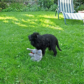 Arabella loves to play in the garden… (photo by family Rühl)