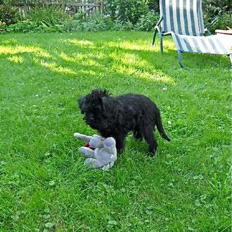 Arabella spielt sehr gern im Garten... (Foto: Familie Rühl)