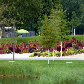 Uferstauden + Klimabäume