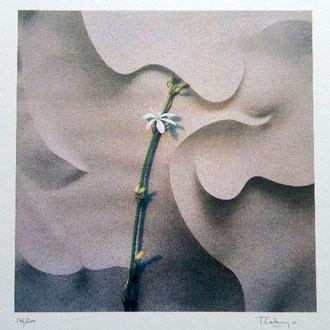 Toni Catany. Homenatge a Gaudí. 2002. Col·lecció Raúl Sanz