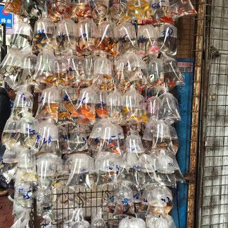 Goldfischmarkt
