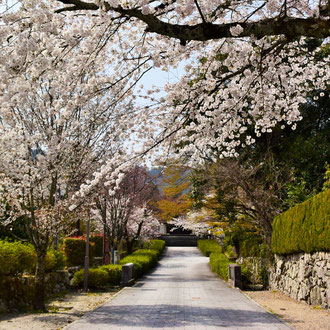 Enjoy strolling around the beautiful temple town of Sakamoto