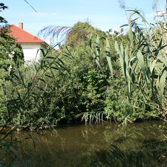 Feuchtbiotop rund um die Kormoranstraße