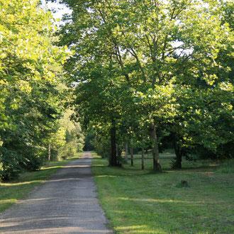 Alter Frankfurter Weg im Käfertaler Wald