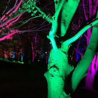 Zahlreiche Events und Festivals im gesamten Jahr locken von überall her Menschen an, wie z.B. die Winterlichter im Luisenpark