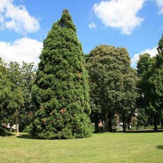 August-Bebel-Park