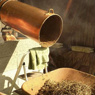 """""""Pailles"""" de lavande : résidus après la distillation"""