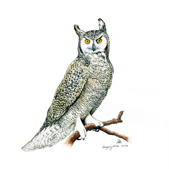Owl Moccafest Commission