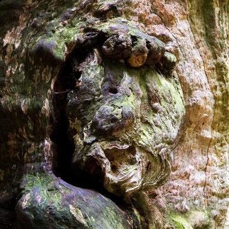 der Waldgeist im Urwald