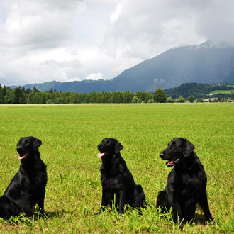 Maja, Quincey und Fitch