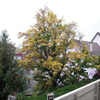 ...im Herbst...