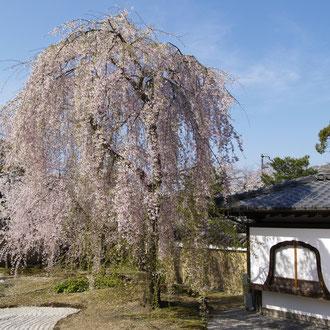 高台寺 京都