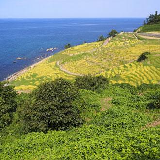 千枚田 輪島 石川