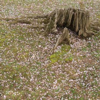 奈良公園 奈良