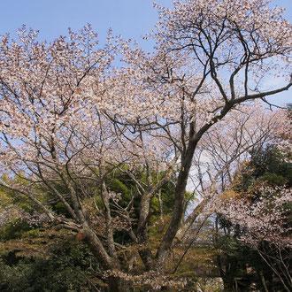 談山神社 奈良