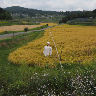 井原 岡山