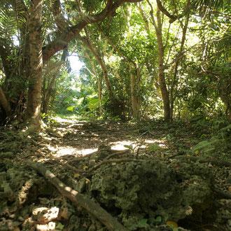 クボウ御嶽の森 久高島 沖縄