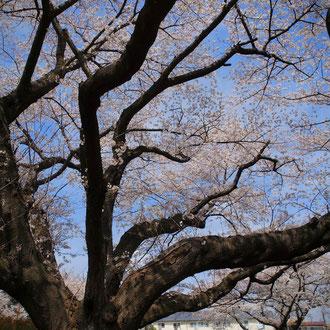 嵯峨野 京都