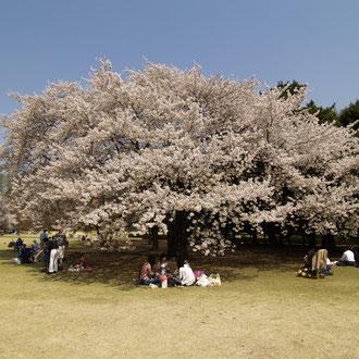 新宿御苑 東京