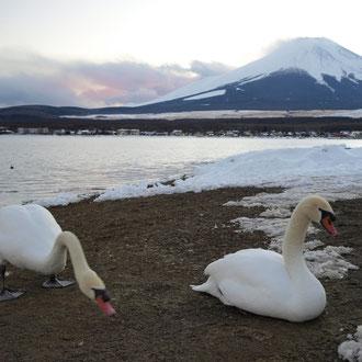 山中湖 冬季