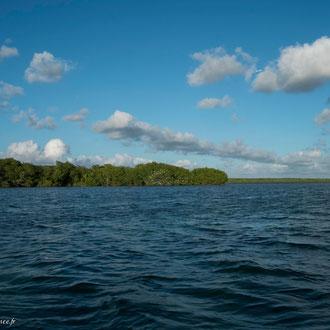 Vue sur la mangrove côtière au large