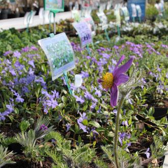 Vaste planten Voorjaarsactie